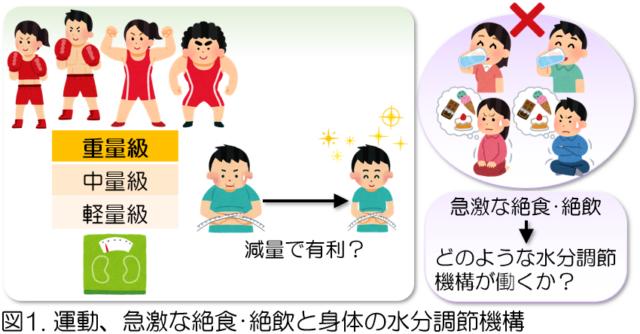 図1運動、急激だ絶食・絶飲と身体の水分調節機構